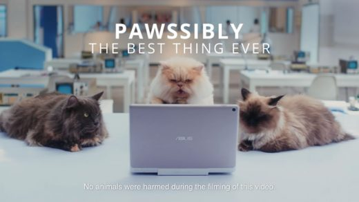 cats-and-zenpads